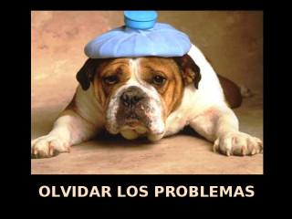 Olvidar los problemas. Perro con bolsa de agua caliente encima de la cabeza.